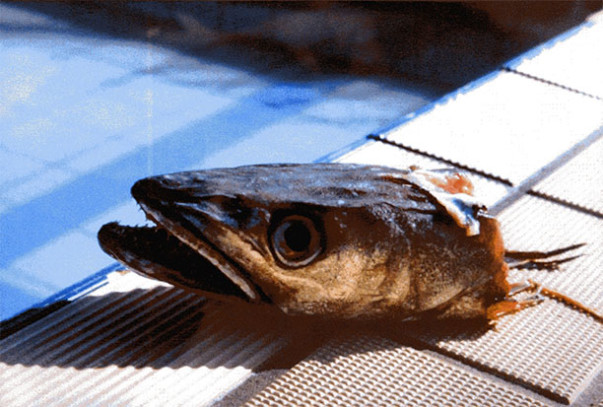 Aqua Lunch (II)