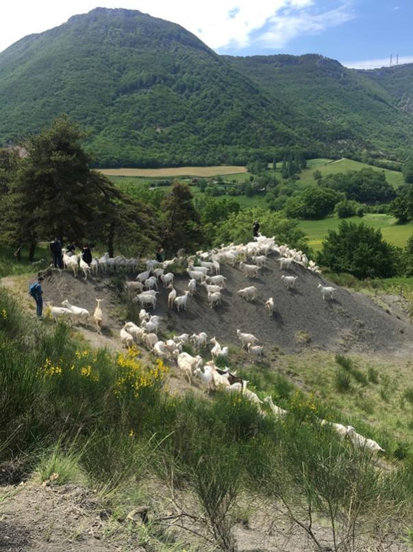 Effondrement des Alpes : Flirt en montagne