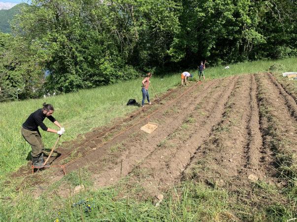 Les pommes-de-terre du confinement : plantation et projet de jardin partagé sur le site des Marquisats