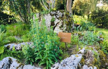 Effondrement des Alpes : 3e résidence d'artiste d'été à l'ESAAA